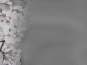 Cherry Blossom 10 - PowerPoint Templates