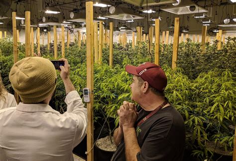 Come along on a cannabis tour in Seattle - The Cannifornian