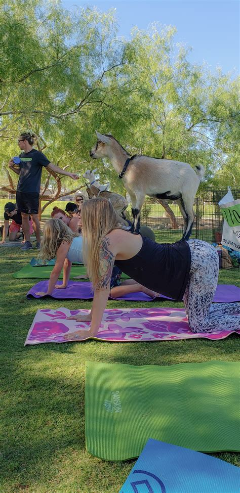 Relax with Goat Yoga in Las Vegas - YouFoundSarah