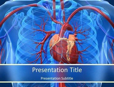 Download Cardiovascular System Facts Powerpoint Template