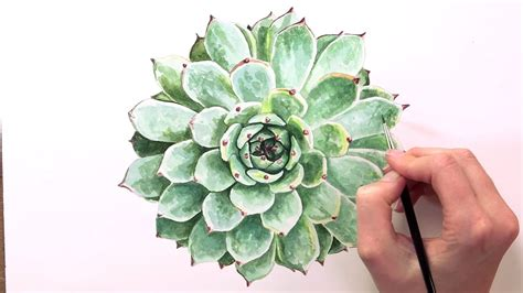 How to paint succulent leaves in watercolor - YouTube